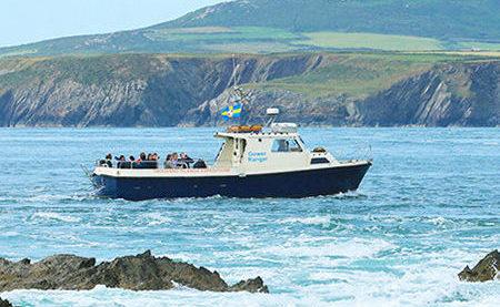 Ramsey Island boat trips in St Davids Wales