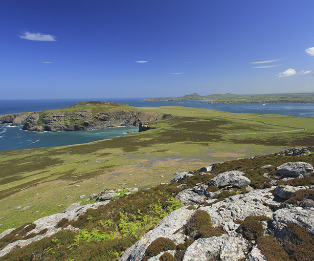 Guided walk on Ramsey Island with a RSPB warden