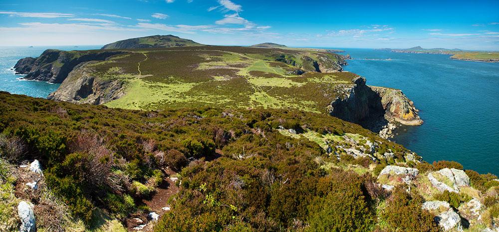 Ramsey Island RSPB Nature Reserve Pembrokeshire coast National Park