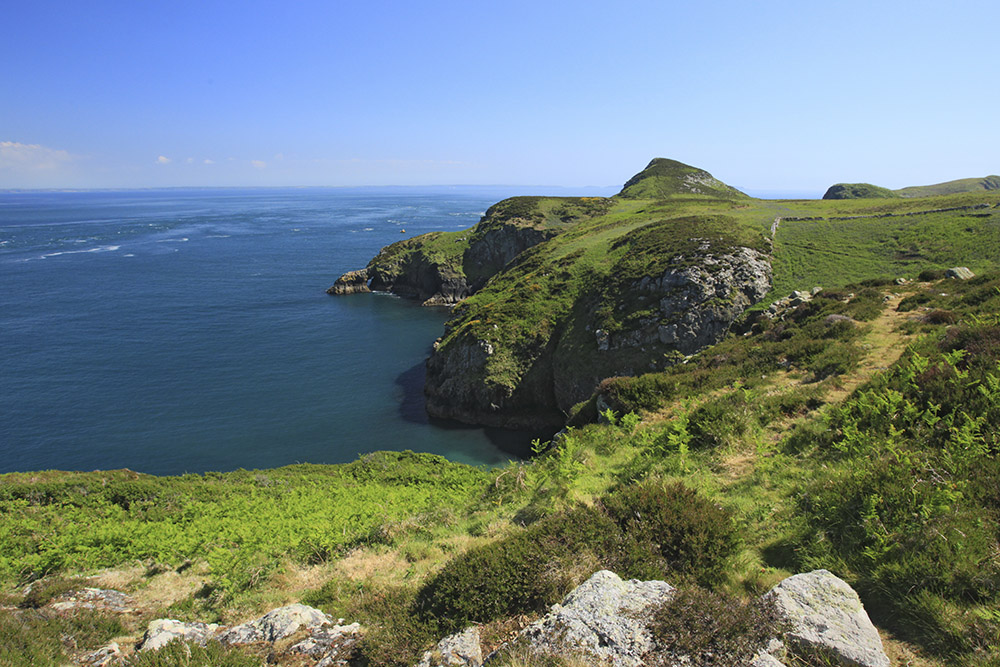 Ramsey Island RSPB Nature Reserve guided walks
