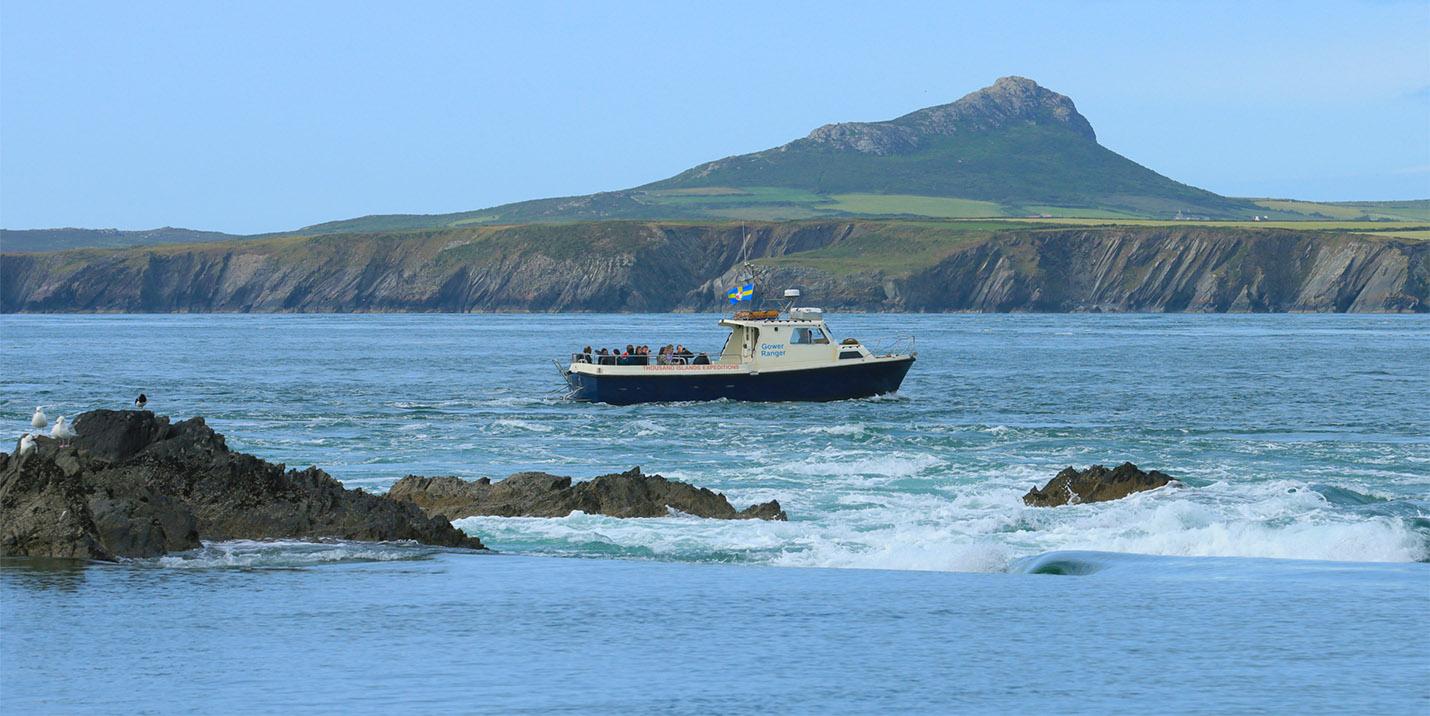 Wildlife boat trips Ramsey Sound Pembrokeshire