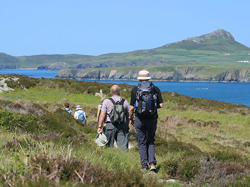 guided walks on ramsey island with RSPB guides
