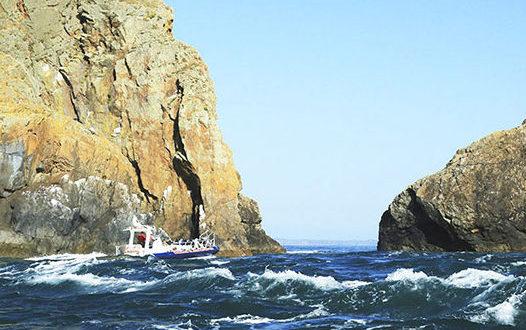Jet boat trips ramsey island seabirds