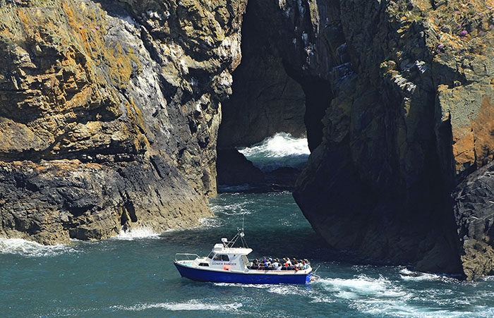 Boat trips around Ramsey Island with Thousand Islands Expeditions