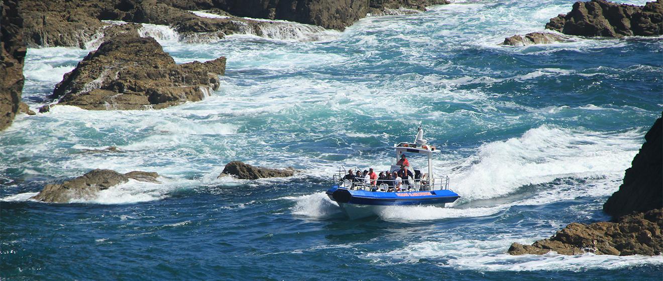jet boat wildlife adventure